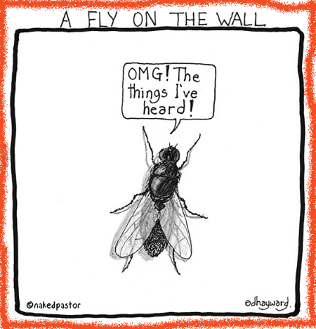 absolutt-np-fly-on-the-wall